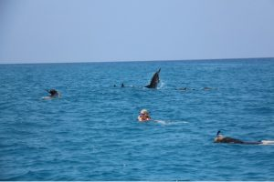 Delfinschwimmen Hawaii